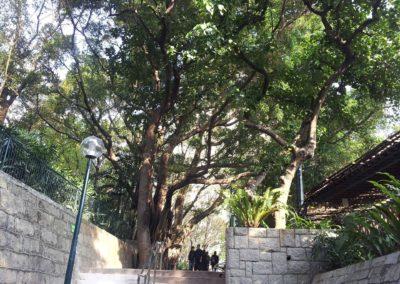 Kowloon Park 04